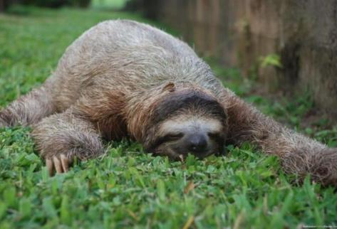 https://www.intelligentliving.co/fighting-bacteria-sloth-fur/